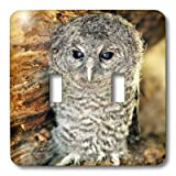 3dRose LLC  lsp_9903_2 Tawny Owl Strix Aluco One Month Young Owl Aragon Spain   Double Toggle Switch