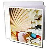 Sea Shells - Sea Shells - 12 Greeting Cards with envelopes (gc_935_2)