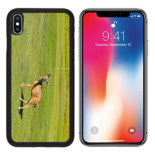 MSD Premium Apple iPhone X Aluminum Backplate Bumper Snap Case IMAGE ID: 30451928 A buck deer is on a golf course near the golf green - Carmel Valley Ranch