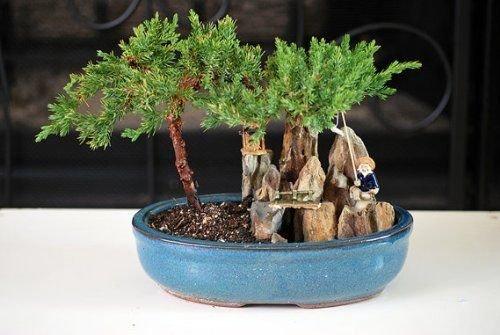 BONSAI Juniper Tree Zen Garden With Pool Fishman Home Plnat Indoor Best Gift New
