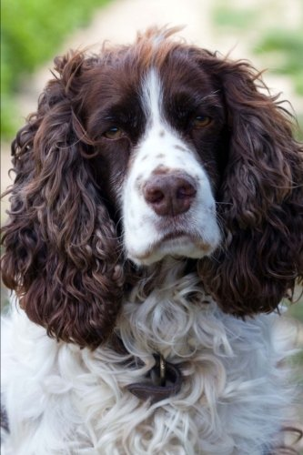 English Springer Spaniel Portrait Journal: 150 Page Lined Notebook/Diary