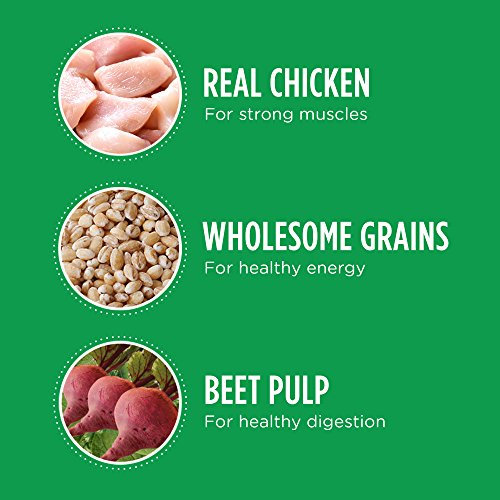 Iams PROACTIVE HEALTH Minichunks Premium Adult Dry Dog Food (1) 30 Pound Bag