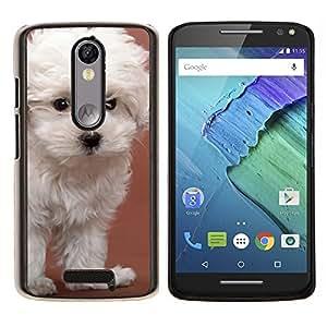 EJOOY---Cubierta de la caja de protección para la piel dura ** Motorola Moto X3 3rd Generation ** --Glen Of Imaal Terrier Dandie Perro Blanco