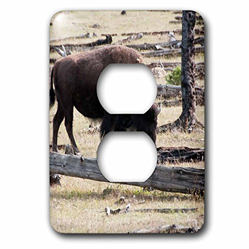 Bison Grass - 3dRose Jos Fauxtographee- Bison Grazing - A Bison grazing on grass in Yellowstone National Park - Light Switch Covers - 2 plug outlet cover (lsp_266363_6)