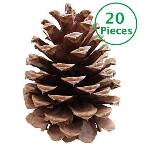 20 X-Large Pine Cones 3-4.5