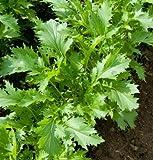 David's Garden Seeds Greens Asian Mizuna D2883A (Green) 500 Organic Seeds