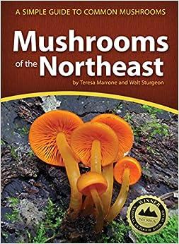 Mushrooms of the Northeast: Mushroom Guide
