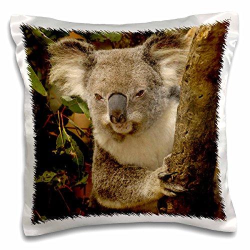 Clock Sydney Square (Danita Delimont - Bears - Koala bear, Lone Pine Koala Sanctuary, AUSTRALIA-AU01 POX0000 - Pete Oxford - 16x16 inch Pillow Case (pc_70179_1))