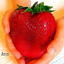 1000 Giant Strawberry Seeds,Rare,Big as a Peach,very delicious Fruit Strawberry fruit seeds for home garden