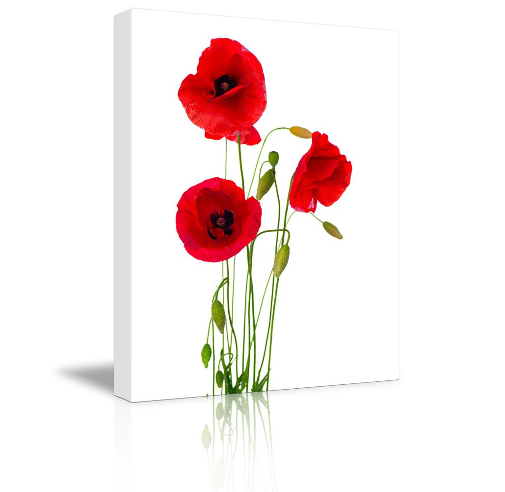 Canvas Prints Wall Art - Red Poppy Flowers Against White Background | Modern Wall Decor/Home Art Stretched Gallery Wraps Giclee Print & Wood Framed. Ready to Hang - 16