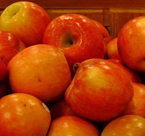 zone 5 fruit trees - 3