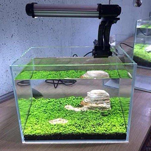 Kicode Planta de semillas acuáticas Hierba de agua Musgo Paisaje Decoración de estanque Pecera Hierba de agua Musgo Paisaje Decoración de estanque ...