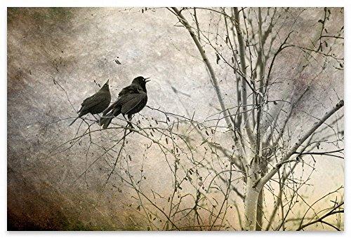 Blackbirds Fine Art Photography Print Pair of Blackbirds