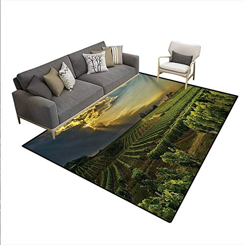 (Carpet,Sunset Over The Vineyards The South France Sunbeams Cloudscape Picture,Outdoor Rug,Green Yellow Gray,6'x9')