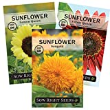 Sow Right Seeds - Sunflower Seed Collection for planting outdoors. Includes three varieties: Dwarf Sungold, Lemon Queen, and Velvet Queen. Non-GMO Heirloom Seed, Wonderful Gardening Gift.