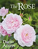 Amazon / ACC Distribution: The Rose (David Austin)