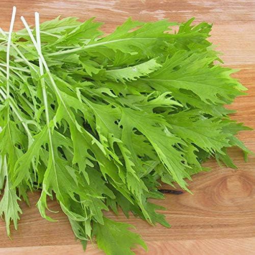 Mizuna, mostaza japonesa verde - semillas de hierbas, 100 semillas/pack: Amazon.es: Jardín