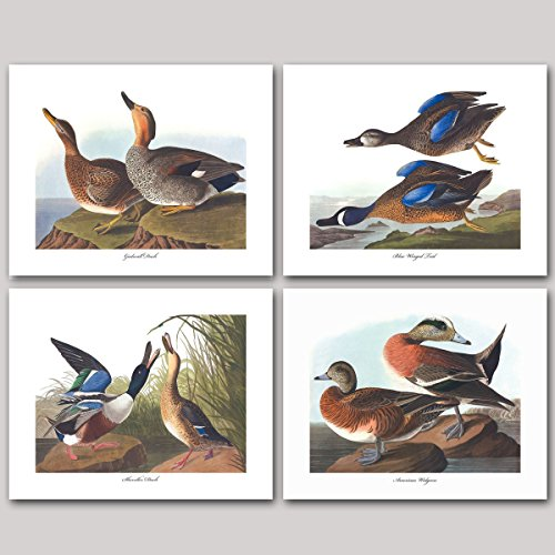 Wigeon Set ((Set of 4) Dabbling Duck Prints (Audubon Bird Art, Home Wall Decor) Gadwall Blue Winged Teal Shoveler Wigeon - Unframed)