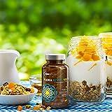Probiotics 100 Billion CFU | Clinical Strength