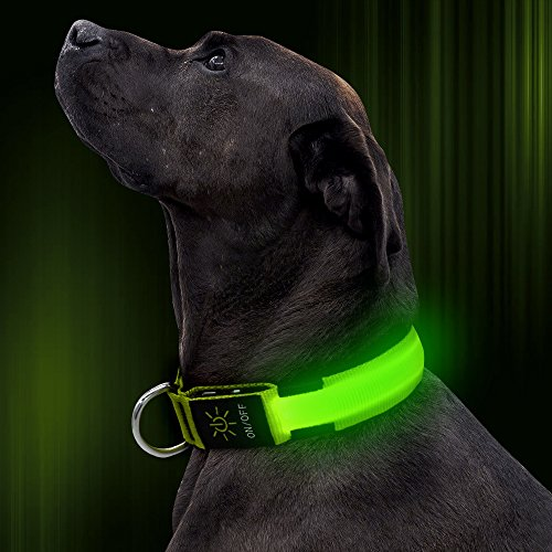 Illumifun LED Dog Collar USB Rechargeable Adjustable Nylon Webbing Flashing Light up Collar Make Your Dogs Seen & Safe in The Dark(Green, (Dog Collar Light)