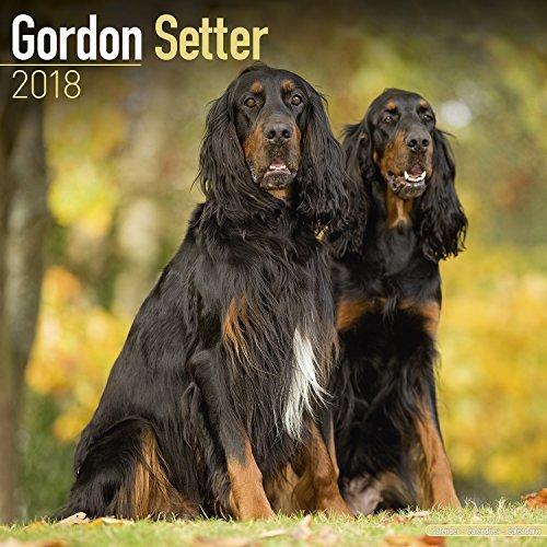 Gordon Setter Calendar 2018   Dog Breed Calendar   Premium Wall Calendar 2017 2018