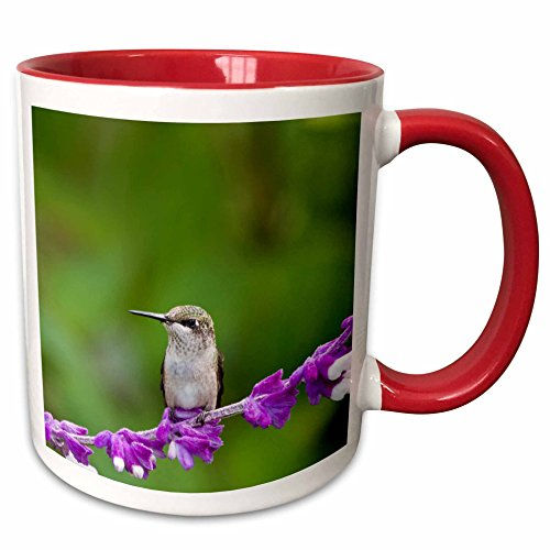 3dRose Danita Delimont - Hummingbirds - Ruby-throated Hummingbird at Mexican Bush Sage in Illinois. - 15oz Two-Tone Red Mug (mug_208475_10) (15 Ounce Hummingbird Feeder)