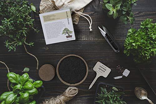 best bonsai tree growing kit