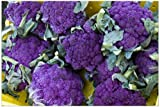 Purple Sprouting Broccoli 200 Seeds Delicious and Beautiful HEIRLOOM...