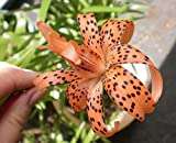 Tiger Lily ,Double (Bag Of 3)Unusual