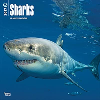 Sharks - 2017 Calendar 12 x 12in