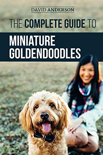 The Complete Guide to Miniature Goldendoodles: Learn Everything about Finding, Training, Feeding, Socializing, Housebreaking, and Loving Your New Miniature Goldendoodle Puppy by Independently published