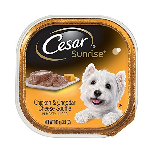 CESAR SUNRISE Chicken and Cheddar Cheese Souffle Breakfast Dog Food Trays 3.5 oz. (Pack of 24) by Cesar Wet Dog Food