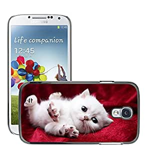 Hot Style Cell Phone PC Hard Case Cover // M00047521 cutely pets animals kitten begging // Samsung Galaxy S4 i9500