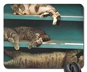 Cats napping on shelf Cute Cool Decorative Design Animal Cat Mousepad Rainbow Designs