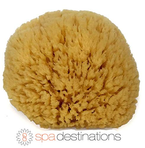 Natural Sea Sponge 6-7 by Spa Destinations Creating The In Home Spa Experience