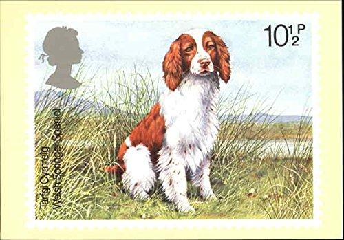 Welsh Springer Spaniel Dogs England Original Vintage Postcard by CardCow Vintage Postcards