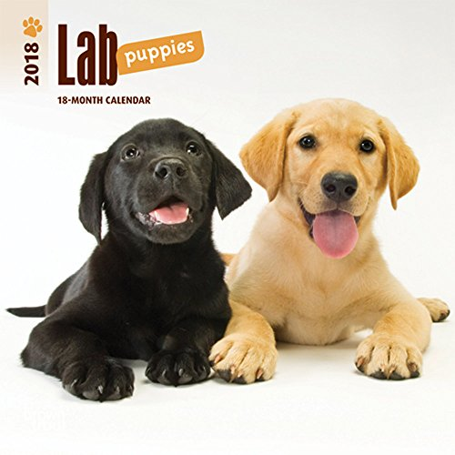 Lab Puppies 2018 7 x 7 Inch Monthly Mini Wall Calendar, Animals Dog Breeds Puppies (Multilingual Edition)