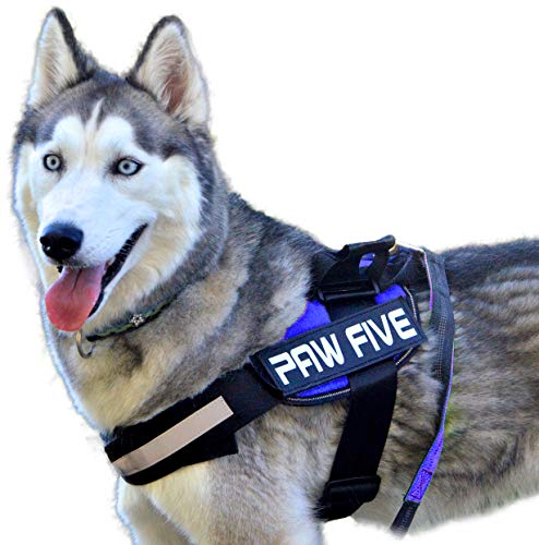 Paw Five CORE-1 No-Pull Easy Walk Reflective Dog Harness with Built-in Waste Bag Dispenser Adjustable Padded Control for Medium and Large Dogs, Check Sizing Chart Before Ordering (Medium, Sky Blue)