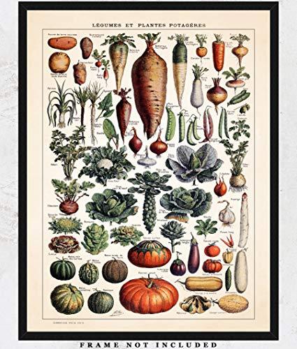 Vintage Heirloom Vegetables Wall Art Print: Unique Room Decor for Boys, Girls, Men & Women - (11x14) Unframed Picture - Great Gift Idea
