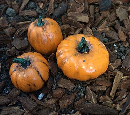 The Fiddlehead Fairy Garden Miniature Pumpkin Accessory Set (Set of 3) - Myer City Garden