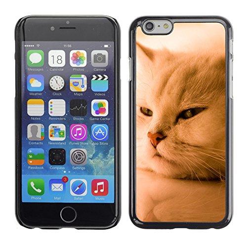 "Premio Sottile Slim Cassa Custodia Case Cover Shell // V00003282 exotique chat blanc // Apple iPhone 6 6S 6G 4.7"""