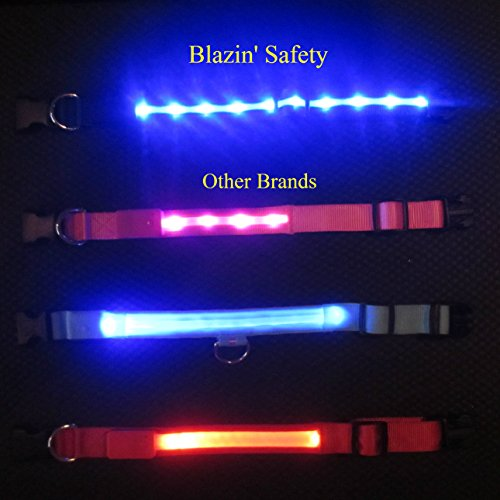 Image of Blazin' Safety LED Dog Collar – USB Rechargeable with Water Resistant Flashing Light, Medium, Black