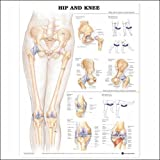 Hip and Knee Anatomical Chart, 3D Raised Relief, Anatomical Chart Company Staff, 1587799065