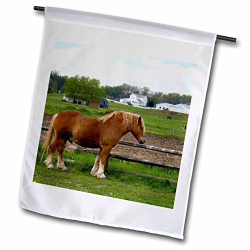3dRose fl_93373_1 A Farm Scene with Horses Near Berlin Ohio US36 Dfr0020 David R Frazier Garden Flag, 12 by 18-Inch