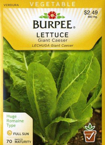 Burpee Seed Lettuce (Burpee 66073 Lettuce, Head Giant Caesar Seed Packet)