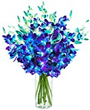 #2: Exotic Sapphire Orchid Bouquet Of 20 Fresh Blue Dendrobium Orchids From Thailand with Free Vase Included