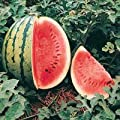Crimson Sweet Watermelon - 80 Seeds