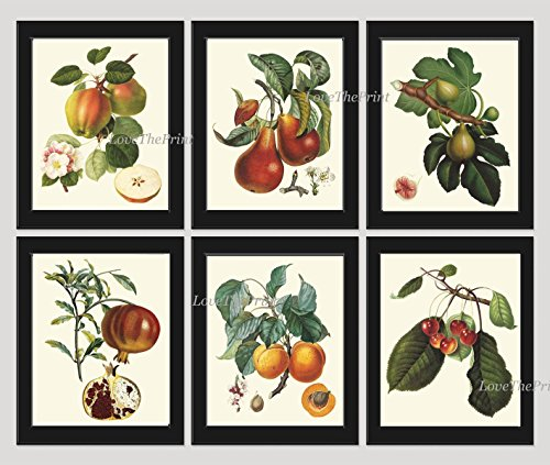 Fruit Print Set of 6 Antique Beautiful Botanical Blooming Apple Fowers Fig Pear Pomegranate Apricot Cherries Plants Garden Nature Home Room Decor Wall Art Unframed (Gourmet Settings Frame)