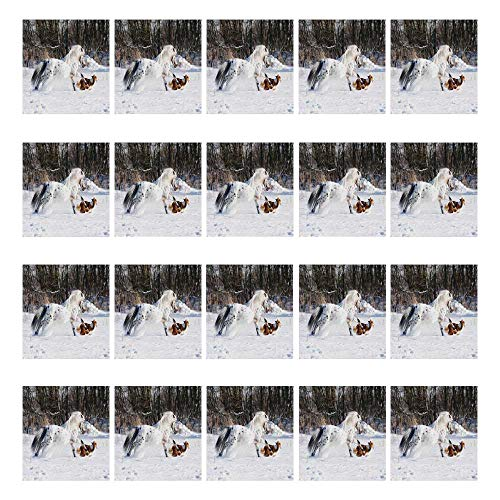 YOLIYANA Horses Waterproof Ceramic Tile Stickers 20 Pieces,Legendary Appaloosa Pony and Sable Border Collie Runs Gallop in Winter Photo Print for Home,3.9