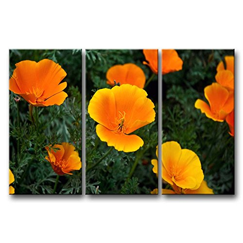 - So Crazy Art 3 Panel Wall Art Painting Orange California Poppy In The Bushes Pictures Prints On Canvas Flower The Picture Decor Oil For Home Modern Decoration Print For Furniture